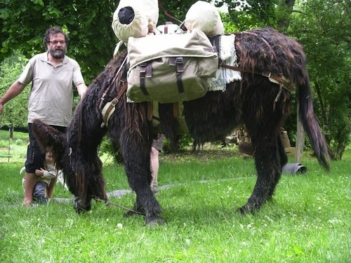 Jacques Thiercy et l'un de ses ânes de randonnée