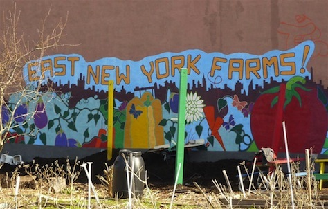 Planter des choux en plein Brooklyn