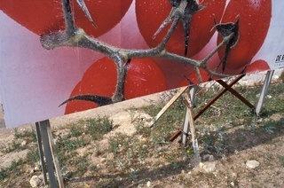 Le voyage d'une tomate vu par Emile Loreaux