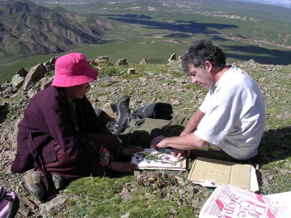 Collecte de plantes médicinales sur le plateau du Kham au Tibet (photo : JP Nicolas).