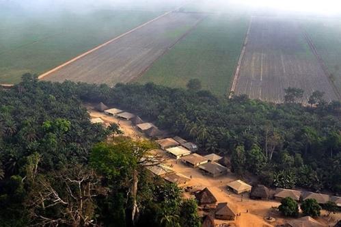 Accaparement des terres en Sierra Leone : Bolloré accusé