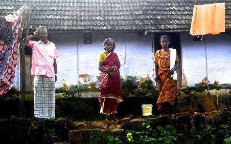 Des cueilleurs de thé dans le Kerala (photo Sindhu Menon)