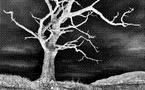 À Pôle emploi : « Sauvez un arbre, radiez un chômeur »...