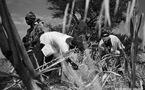 La ruée sur les terres agricoles