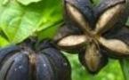 Biopiraterie : les Weleda, L'Oréal, Unilever, etc, à l'amende