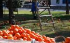 L'exploitation des travailleurs saisonniers en Europe, pandémie ou pas