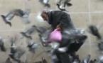Giuseppe et ses amis, les pigeons de Paris