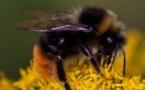 Quelques heures pour sauver les abeilles