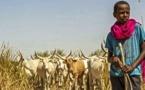 Pétition : 37 villages sénégalais privés de leurs terres