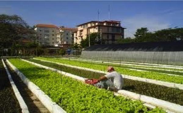 À Cuba, pousse l'agriculture urbaine