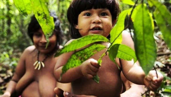 Le Brésil entame enfin le sauvetage des Awá