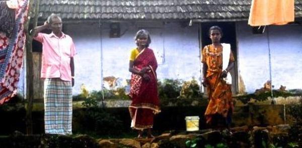 L'exploitation féodale des cueilleurs de thé indiens