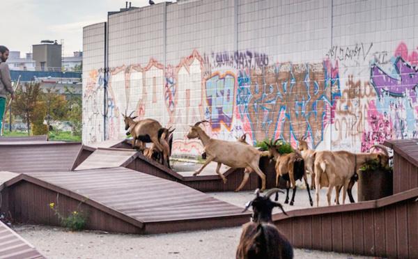 A Bagnolet, une bergerie change la vie au bas des tours